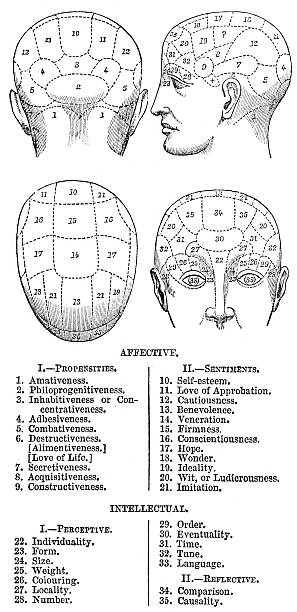 "Phrenology ""Vintage engraving from 1864 of a Phrenology chart. Phrenology is a pseudoscience primarily focused on measurements of the human skull, based on the concept that the brain is the organ of the mind, and that certain brain areas have localized, specific functions or modules."" medical diagram stock illustrations"