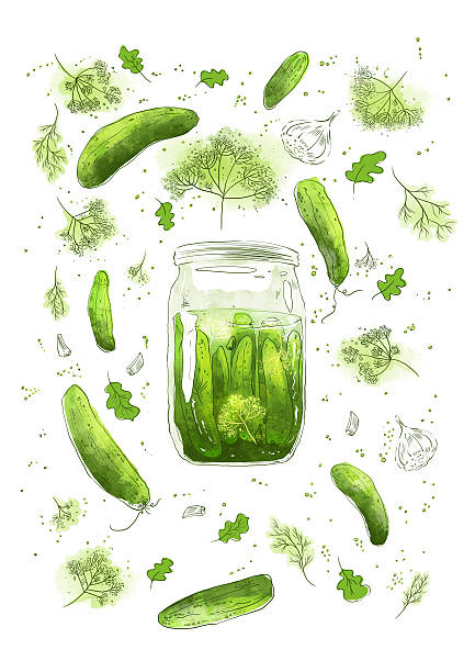 Pickled cucumbers Pickled cucumbers - hand drawn illustration dill stock illustrations
