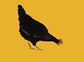 Picturesque illustration of a black chicken on an orange background in horizontal format