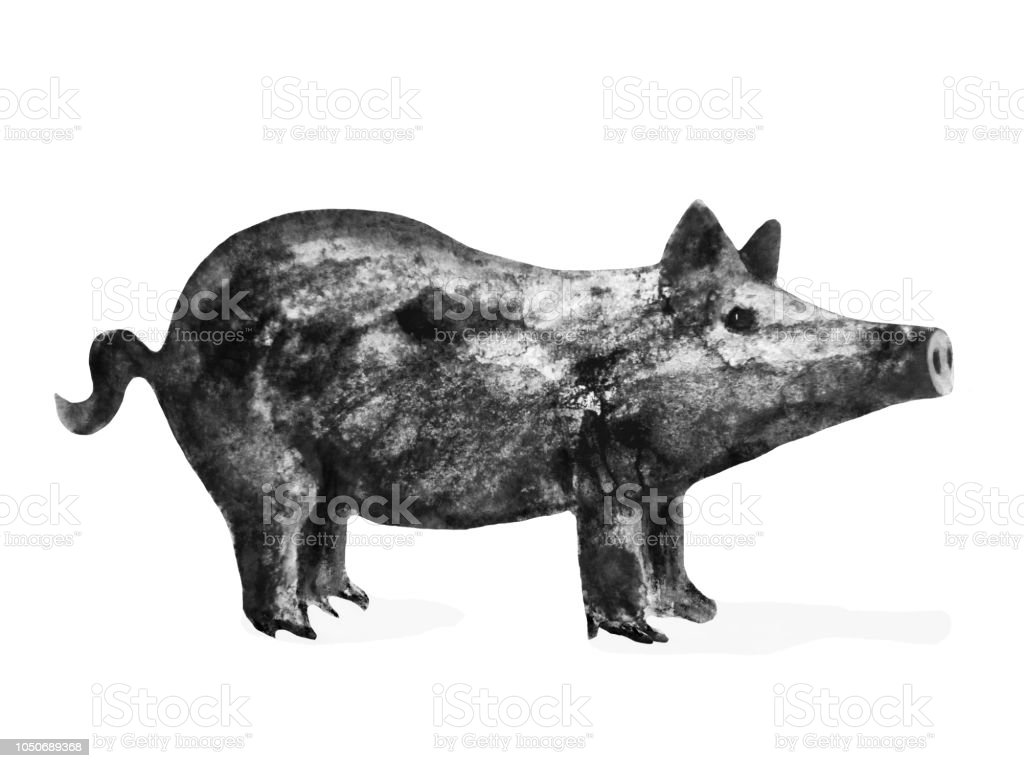 pig - symbol of 2019 year, watercolor ink black and white...