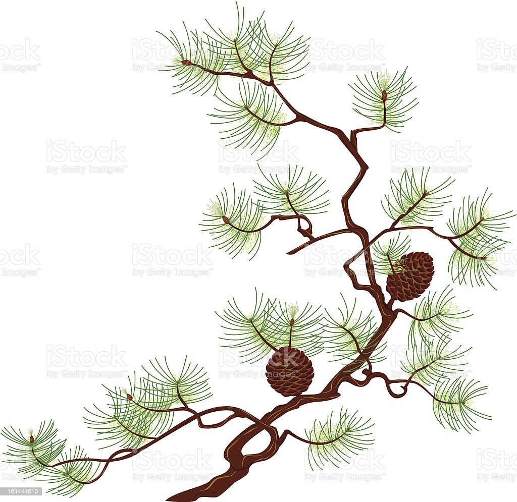 Pine royalty-free pine stock vector art & more images of art and craft
