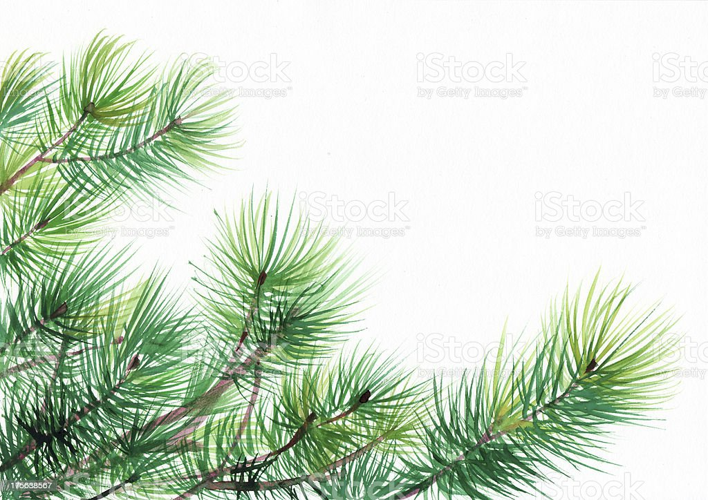 Pine tree branches royalty-free pine tree branches stock vector art & more images of art