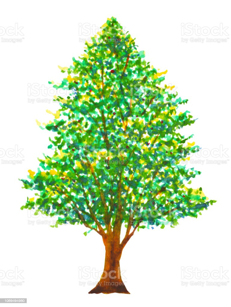 Ilustración De Pino árbol Navidad Acuarela Ilustración Dibujo A Mano