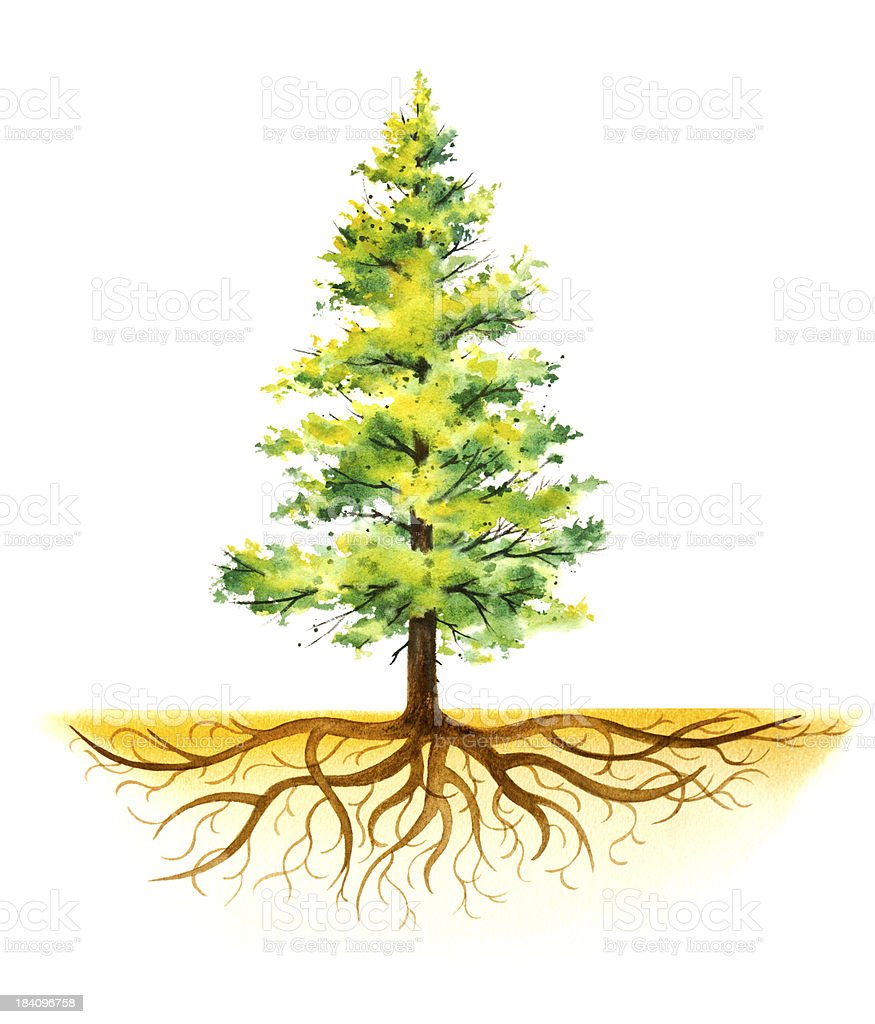 Pine Tree With Roots vector art illustration