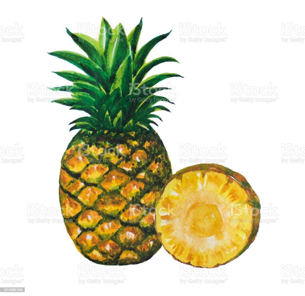Ananas Meyve Boyama Suluboya Ile Boyalı Stok Vektör Sanatı Akşam