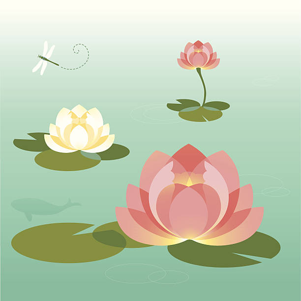 Pink and White Lotus Pond In The Summer  water lily stock illustrations