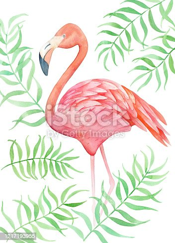 pink flamingo with tropical green leaves isolated on white