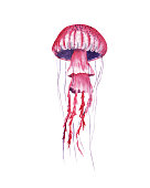 pink Jellyfish hand drawn watercolor illustration. Medusa painting isolated on white background, colorful tattoo design