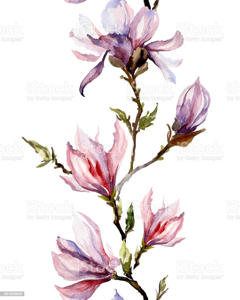 Pink magnolia flowers on a twig on white background. Seamless pattern. Watercolor painting. vector art illustration