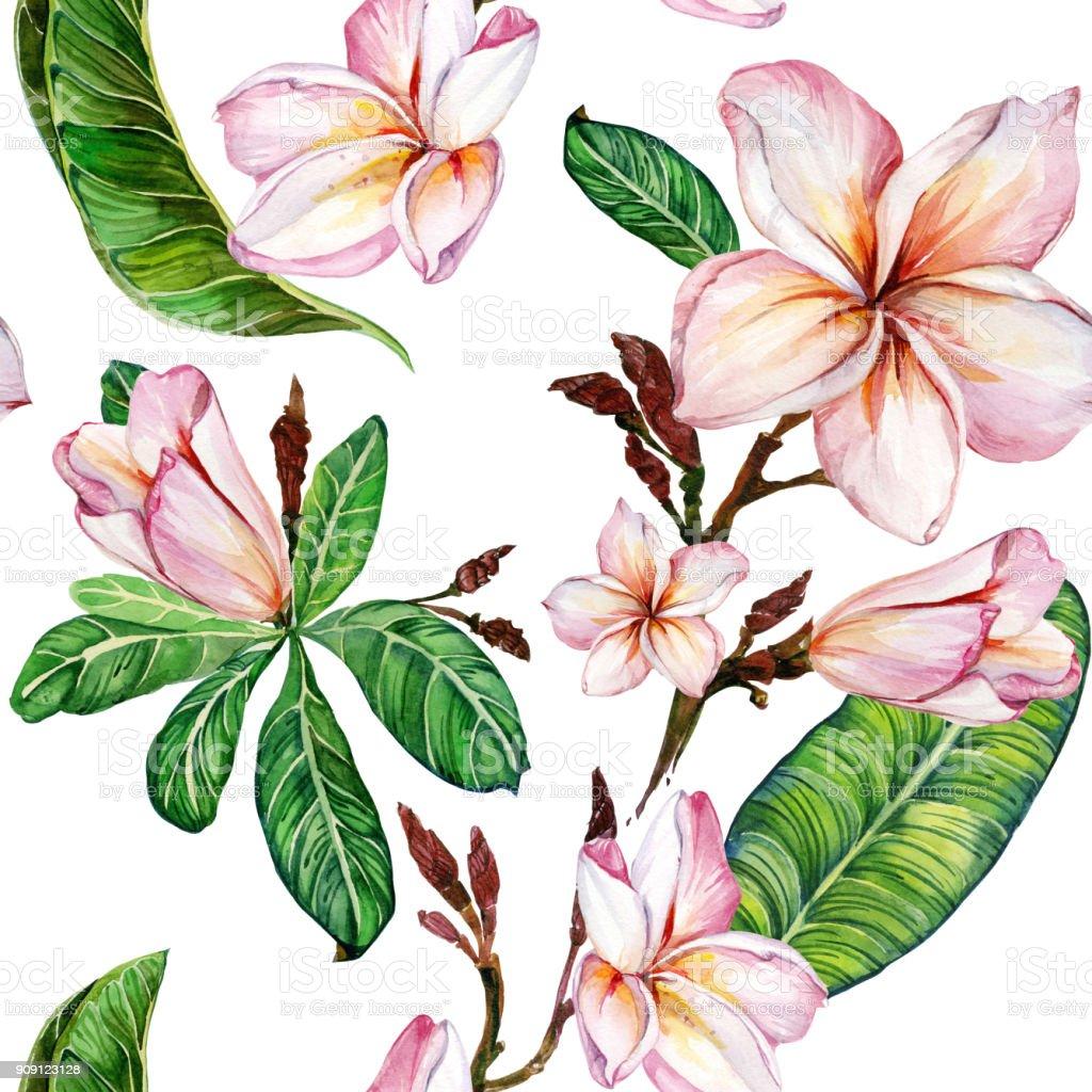 Fleur de plumeria rose sur une brindille. Motif floral sans soudure. Isolé sur fond blanc.  Peinture à l'aquarelle. Illustration de dessinés à la main. - Illustration vectorielle