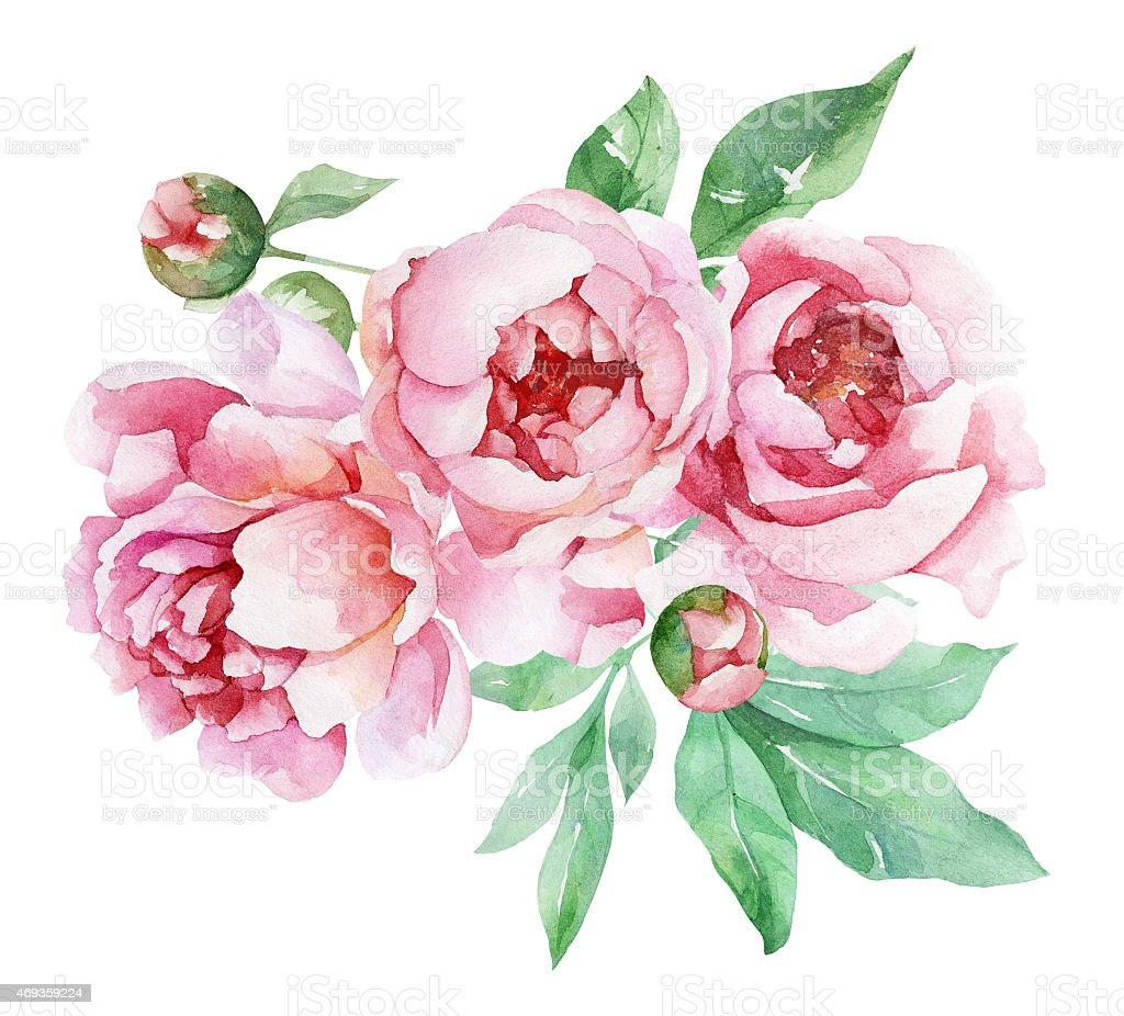 royalty free peony clip art vector images illustrations istock rh istockphoto com peony drawing clipart peony drawing clipart