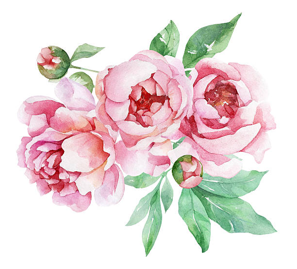 Peonies clipart 20 free Cliparts  Download images on