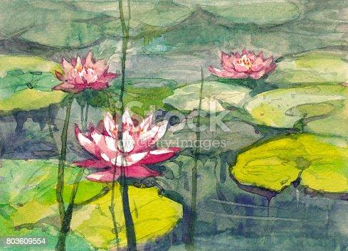pink waterlily flower in pond watercolor