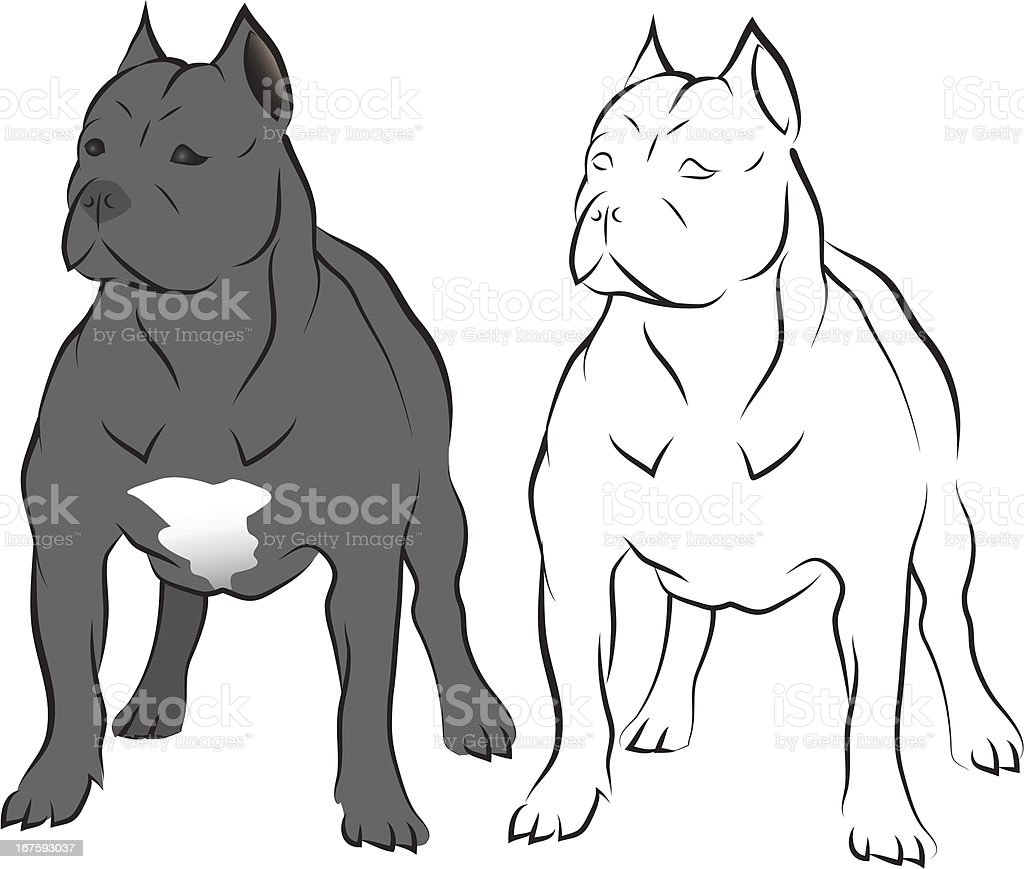 Pit bull. royalty-free pit bull stock vector art & more images of animal