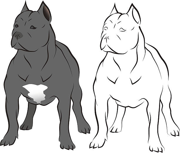 Pit bull. vector art illustration