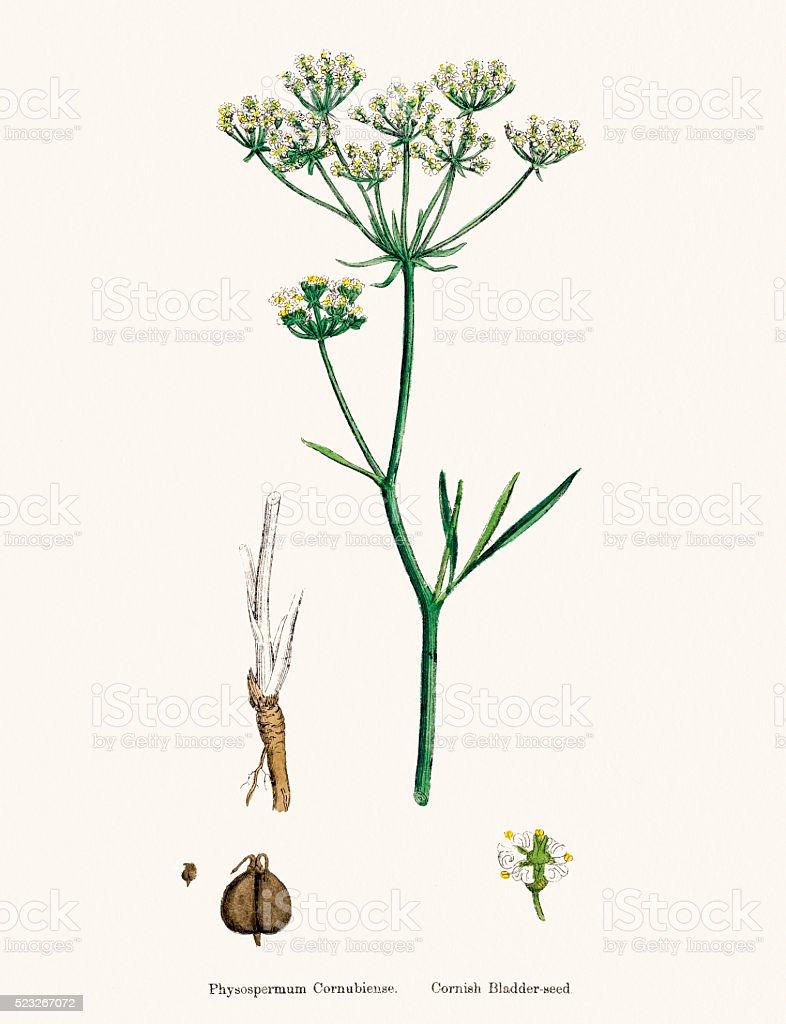 plant scientific illustration vector art illustration
