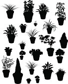 """""""A selection of silhouettes of plants often found in pots on the patio. A mix of real and imagined, but including peppers, tomatoes, strawberries,sage, achillea, decorative grasses etc."""""""