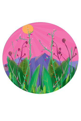 Plants and sunshine with white frame iStock illustration