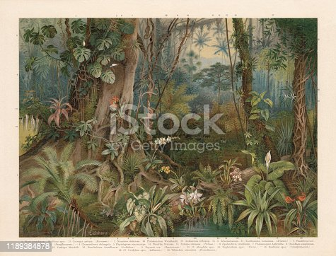 istock Plants of the rainforest, chromolithograph, published in 1898 1189384878