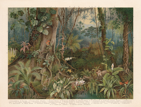 Plants of the rainforest, chromolithograph, published in 1898
