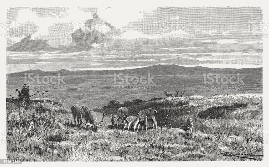 高原在蘇格蘭高地, 木雕, 出版于1897年 - 免版稅動物插圖檔