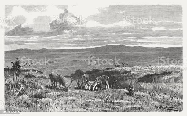 高原在蘇格蘭高地 木雕 出版于1897年向量圖形及更多動物圖片