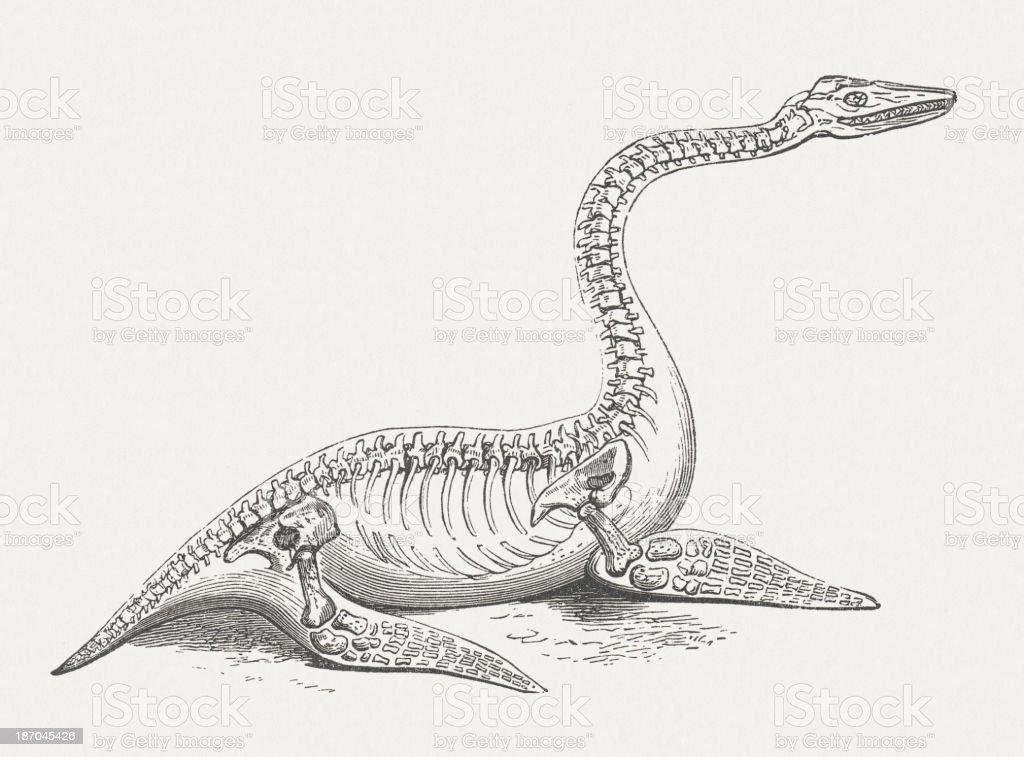Plesiosaur Marine Reptil Período De Publicación 1876 Jurásico ...