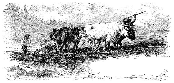 Ploughing in the Nivernais by Rosa Bonheur - 19th Century