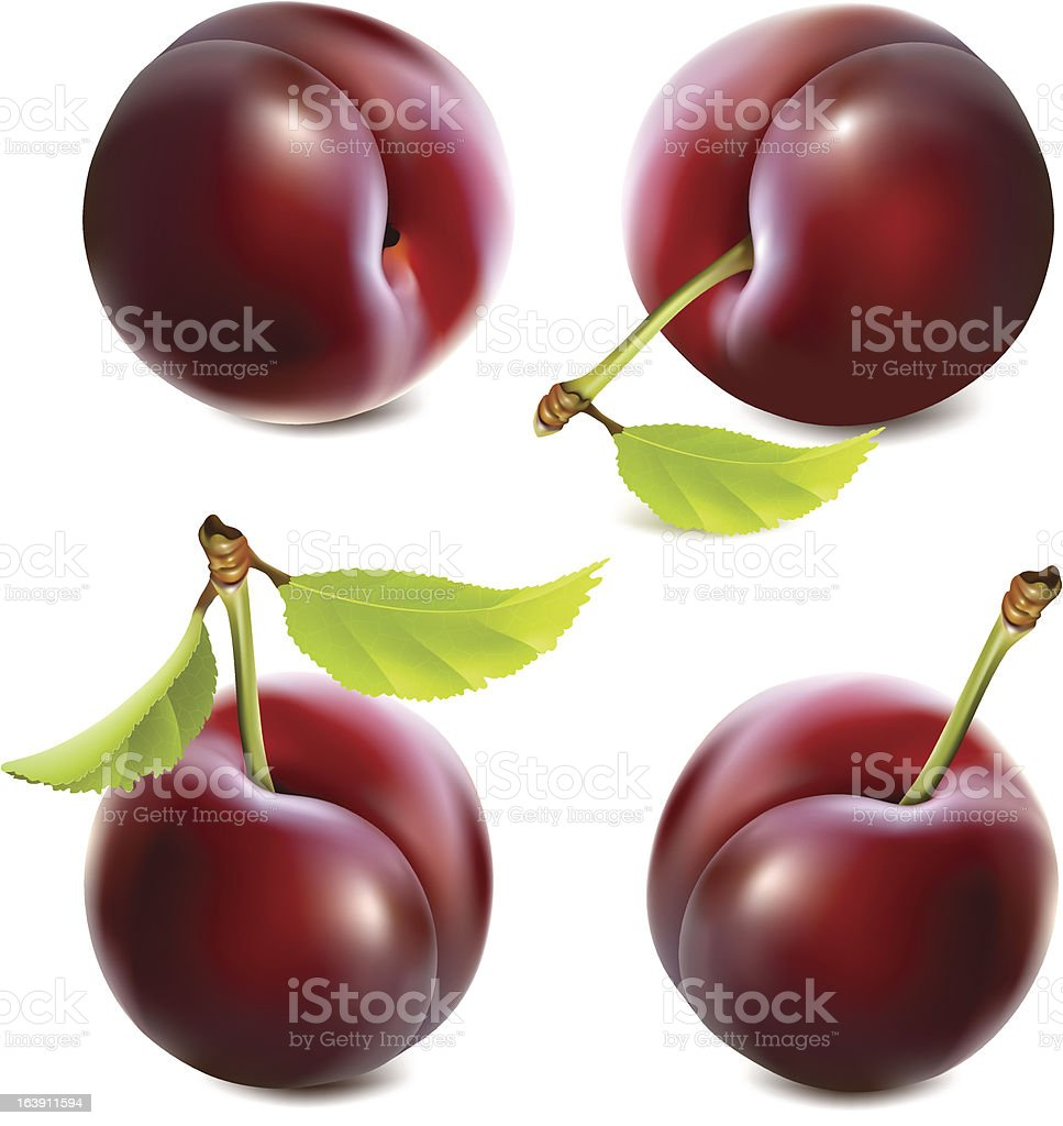 Plums with leaves vector art illustration