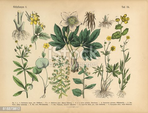 Very Rare, Beautifully Illustrated Antique Engraved Victorian Botanical Illustration of Wildflowers, Poisonous and Toxic Plants: Plate 24, from The Book of Practical Botany in Word and Image (Lehrbuch der praktischen Pflanzenkunde in Wort und Bild), Published in 1886. Copyright has expired on this artwork. Digitally restored.