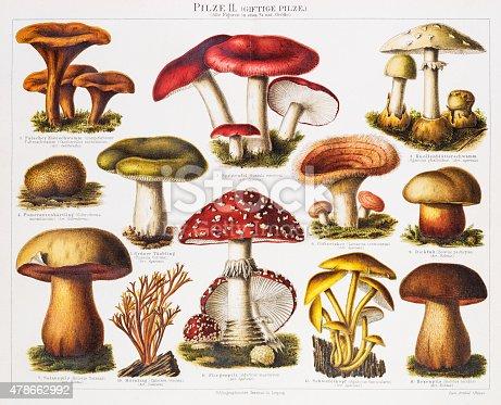 Poisonous Mushrooms Original Antique Chromolithograph