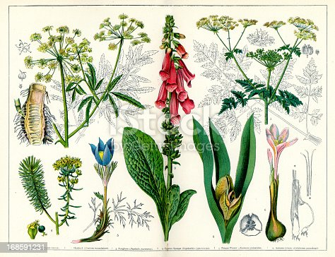 Vintage lithograph of various Poisonous Plants, including Water Hemlock, Hemlock, Foxglove, Cypress Spurge, Pasque Flower and Autumn Crocus