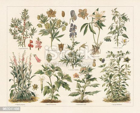 Poisonous plants: 1) February daphne (Daphne mezereum) with fruits and blossoms; 2) Green hellebore (Helleborus viridis) with fruit and seed; 3) Christmas rose (Helleborus niger) with opened fruits; 4) European black nightshade (Solanum nigrum) with fruits and blossom; 5) Monk's-hood (Aconitum napellus) with opened and closed fruits, and blossom (cross section); 6) Foxglove (Digitalis purpurea) with blossom and fruit; 7) Jimsonweed (Datura Stramonium) with blossom and fruit; 8) Henbane (Hyoscyamus niger) with blossom and fruit with opened lid; 9) Deadly nightshade (Atropa belladonna) with blossom and fruit. Lithograph after Paul Behrend (German agricultural chemist, 1853 - 1905), published in 1897.