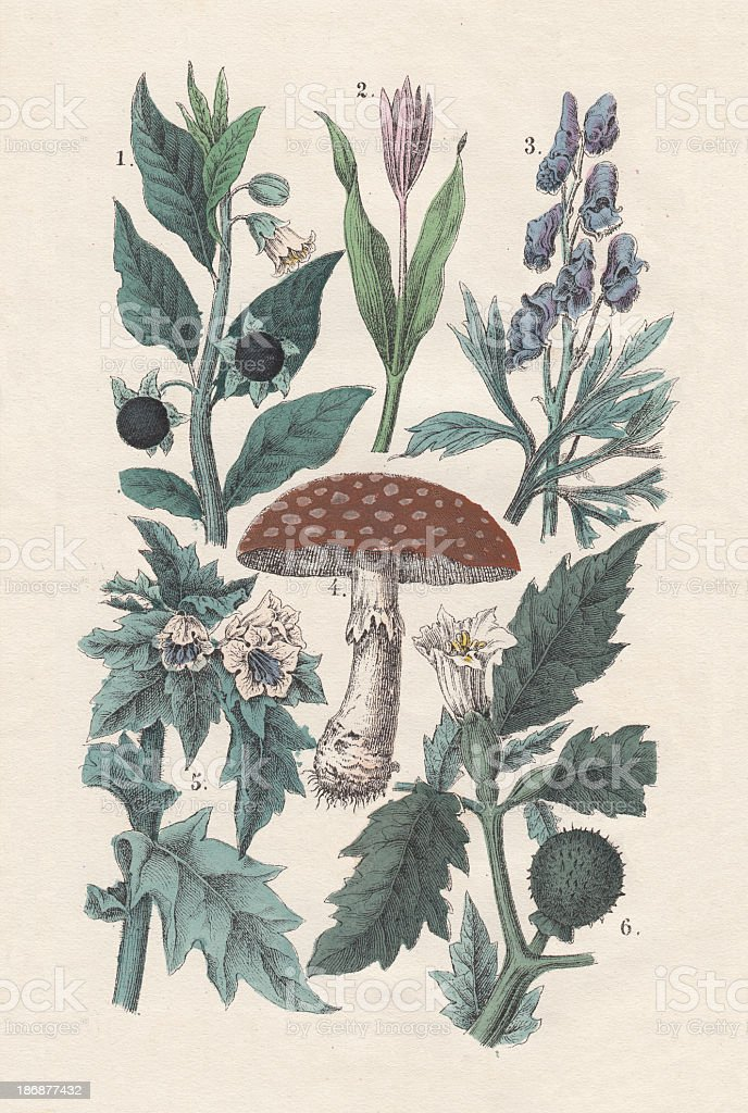 Poisous plants, hand-colored lithograph, published in 1880. royalty-free poisous plants handcolored lithograph published in 1880 stock vector art & more images of aconitum
