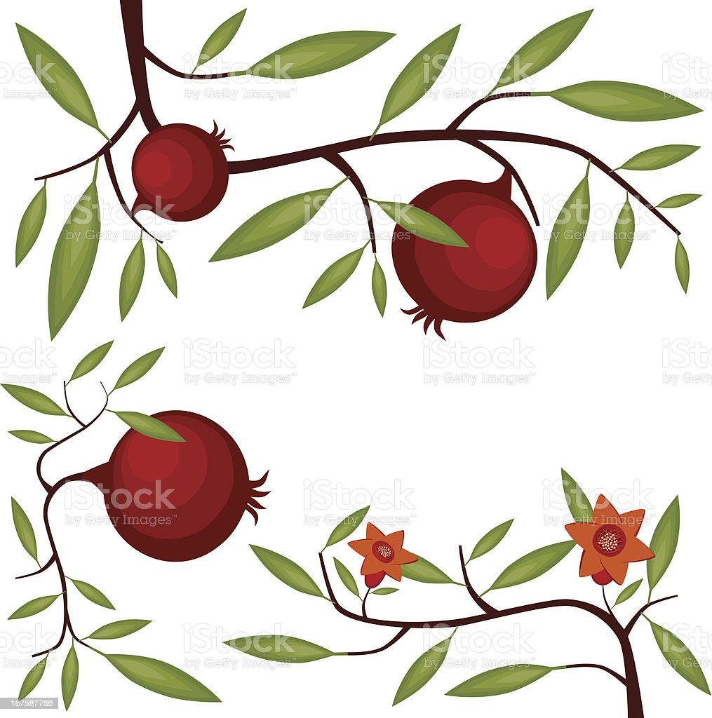 royalty free pomegranate clip art vector images illustrations rh istockphoto com Hand Grenade Bomb Vector