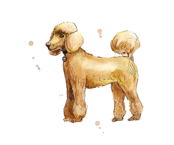 Royalty Free Poodle Puppies Clip Art, Vector Images & Illustrations ...