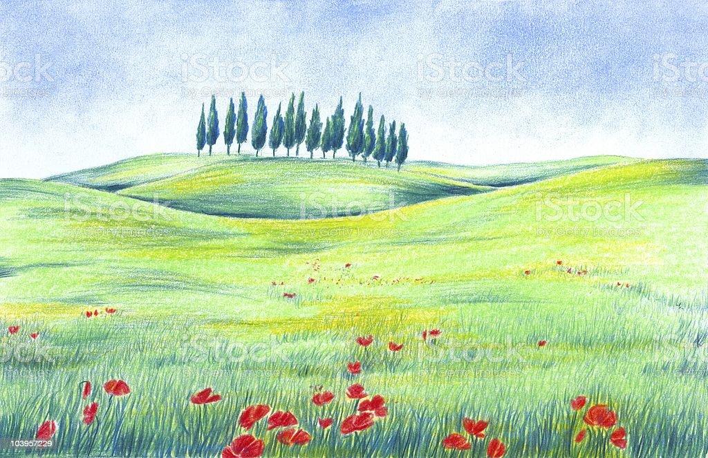 Poppy Field Drawing royalty-free stock vector art