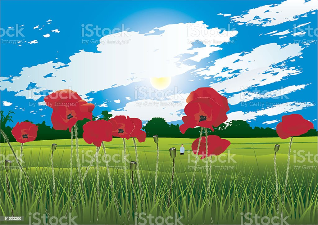 Poppy field royalty-free poppy field stock vector art & more images of color image