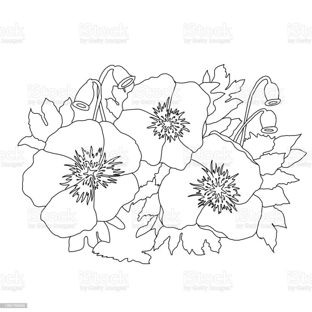 Poppy Flowers And Leaves Coloring Page For Children And Educational Programs Stock Illustration Download Image Now Istock
