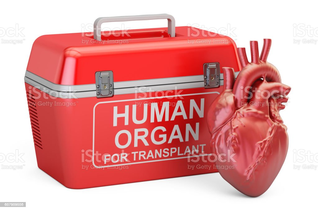 Portable fridge for transporting donor organs with human heart, 3D rendering vector art illustration