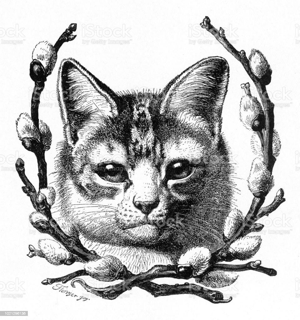 Ilustración de Retrato De Un Gato Enmarcado Por Pussywillows Grabado ...