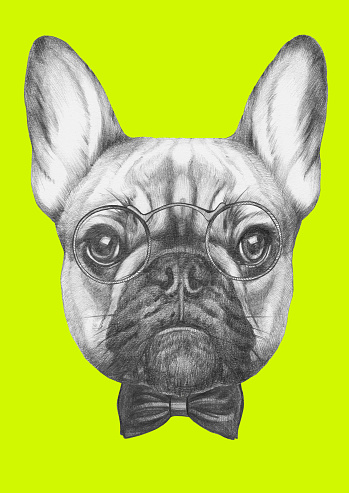 Portrait of French Bulldog with glasses and bow tie.