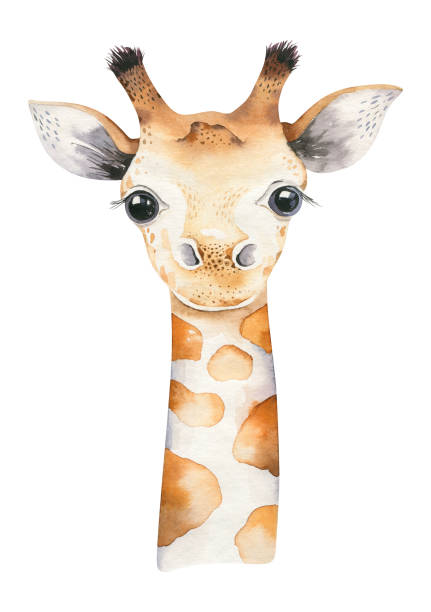 A poster with a baby giraffe. Watercolor cartoon giraffetropical animal illustration. Jungle exotic summer print. A poster with a baby giraffe. Watercolor cartoon giraffetropical animal illustration. Jungle exotic summer design animals stock illustrations