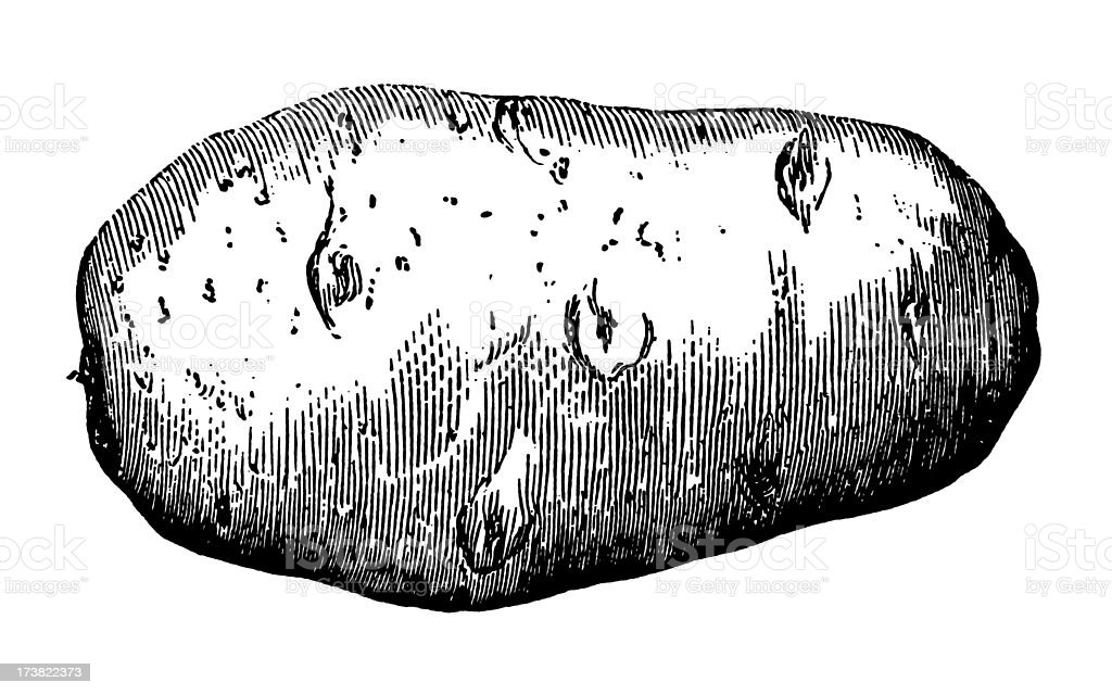 best potato illustrations  royalty-free vector graphics  u0026 clip art