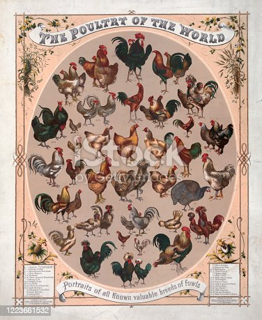 Vintage illustration features portraits of all known valuable breeds of fowls as recorded in the late 19th century.