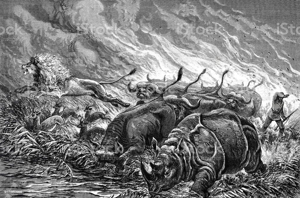 Prairie fire in Africa vector art illustration