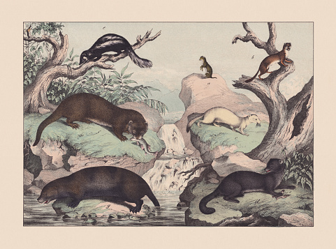Predators (Mustelidae), hand-colored chromolithograph, published in 1869