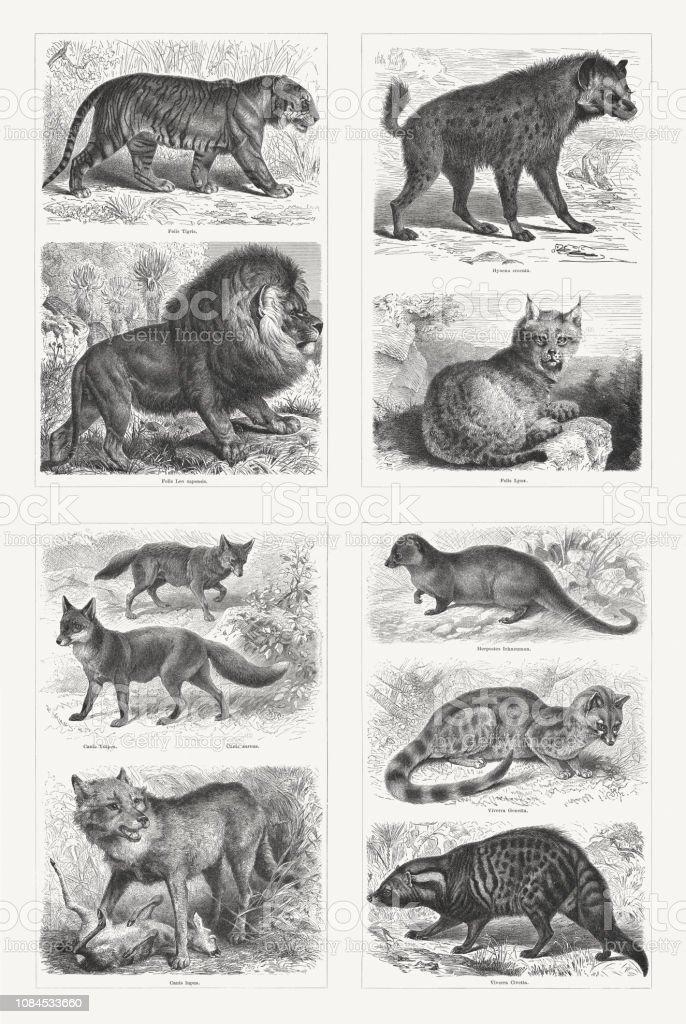 Predators, wood engravings, published in 1897 vector art illustration