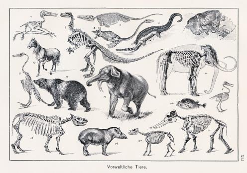 Prehistoric Animals Chromolithography 1899