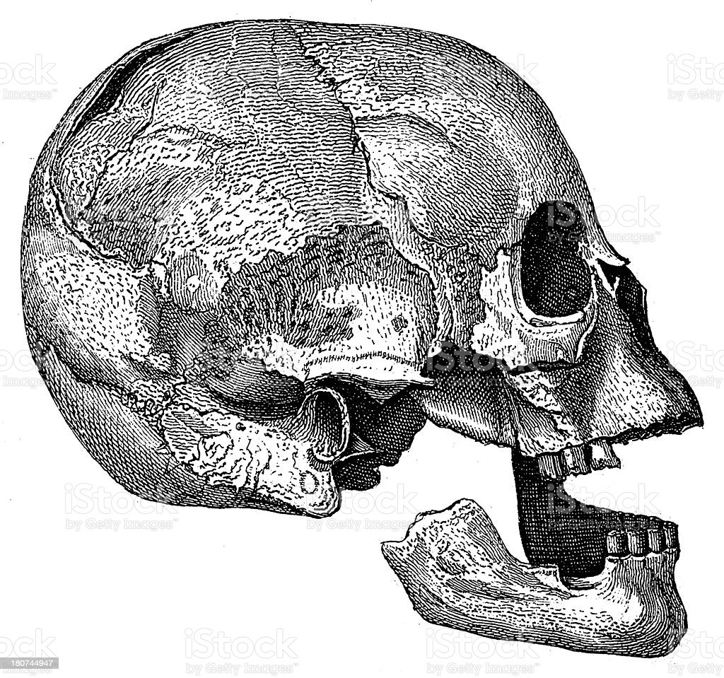 Prehistoric human skull (antique wood engraving) royalty-free stock vector art
